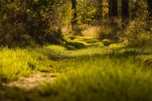 Der Wald als Therapiezentrum